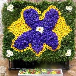 festa-violette-79-1_w500